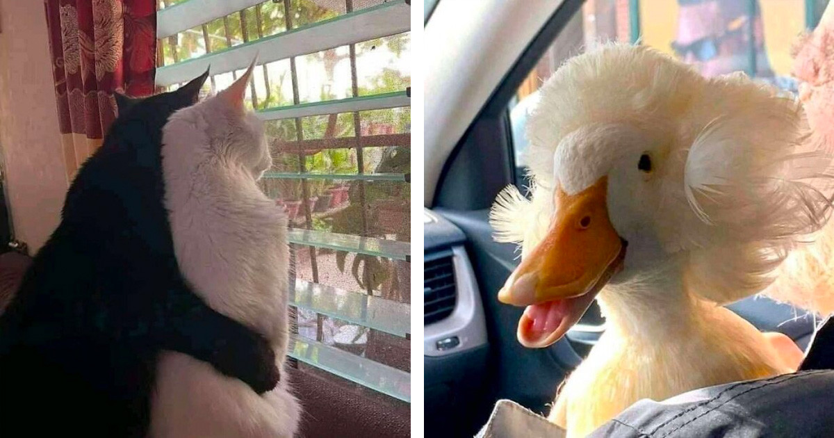 Important Animal Pictures That Require Your Undivided Attention