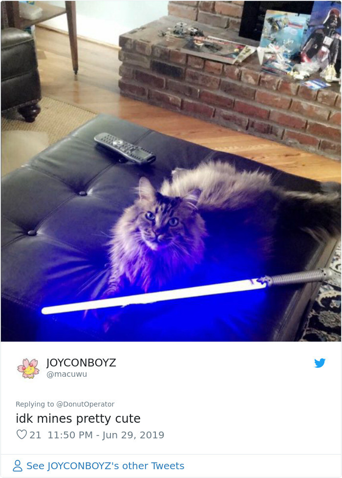 #33 Just a cat with a lightsaber.