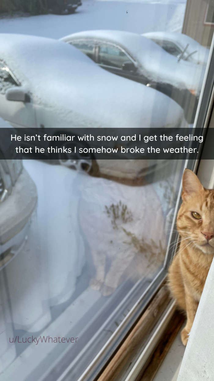 3. Are your cats familiar with snow?