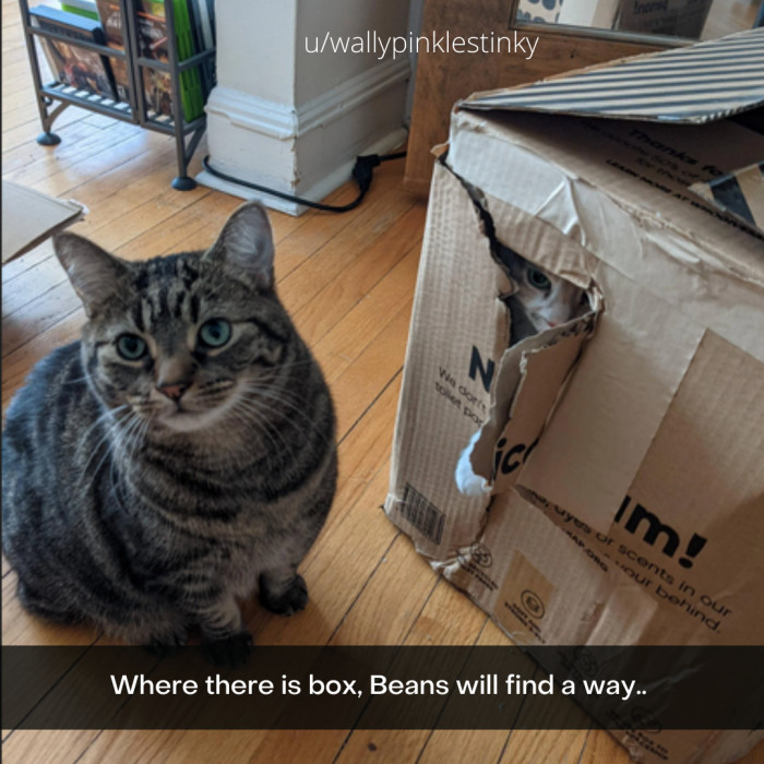 4. Boxes are the Bestest for Cats Everywhere