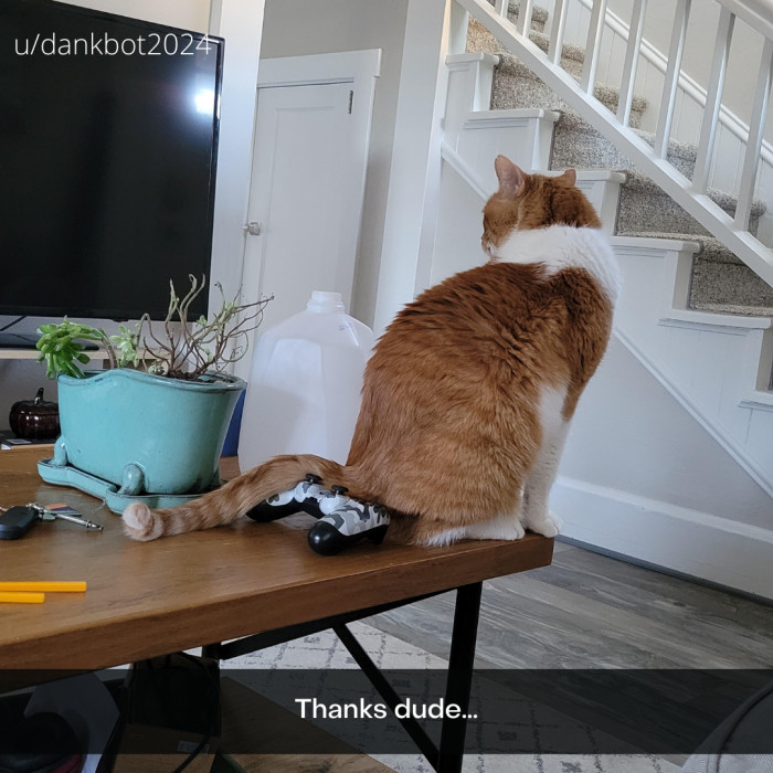 11. Life With Cats 101.2: Their buttholes touch EVERYTHING