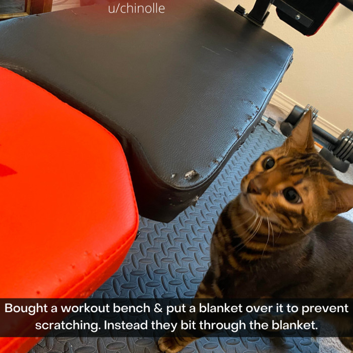 23. When it comes to cats, where there's a will, there's a way.