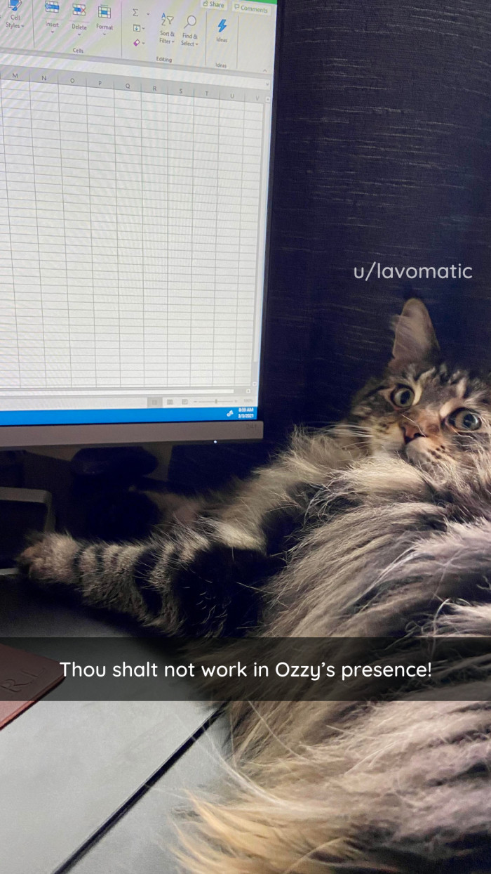 10. Work? With all this fluff laying around? Absurd.