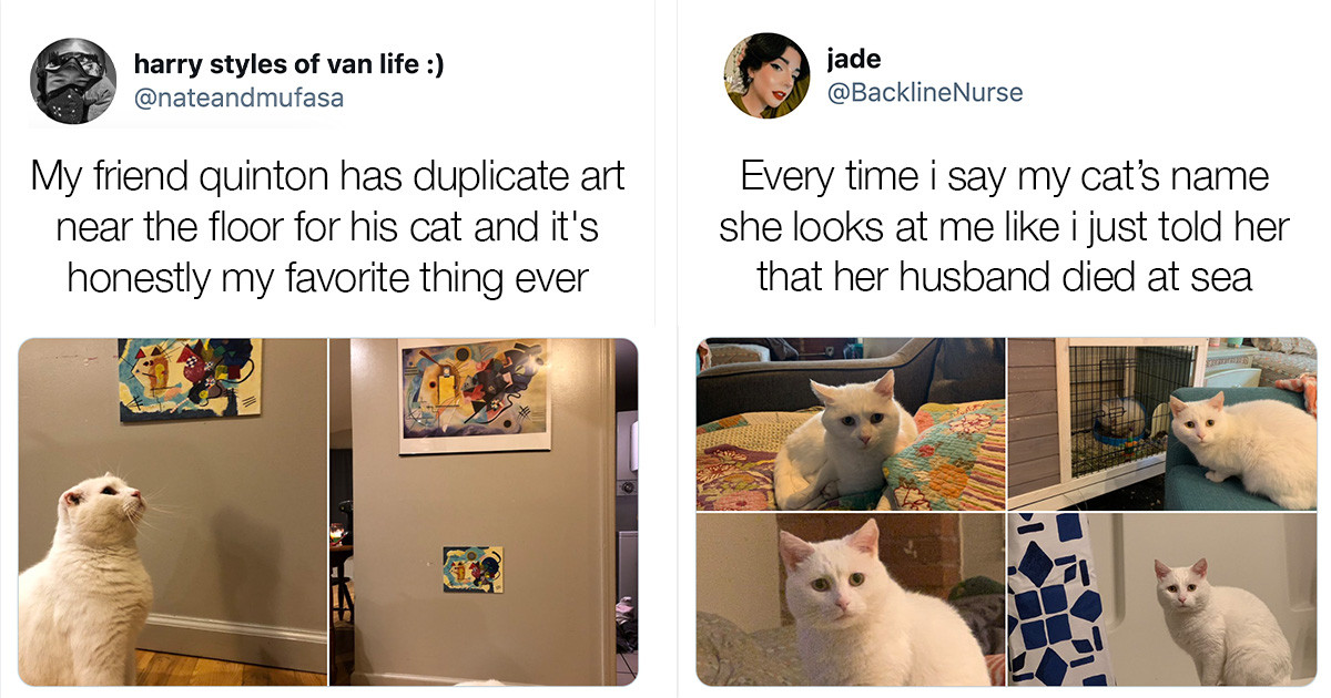 Funny Tweets That Prove Cats Are Weird As Hell