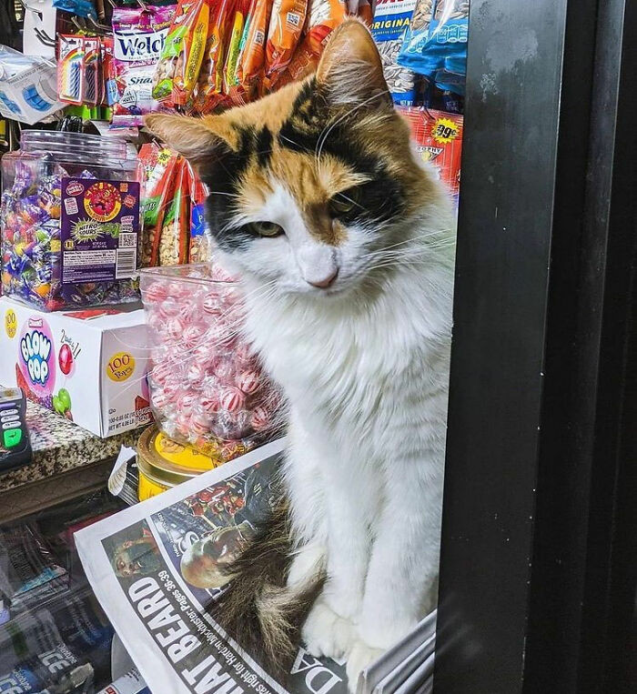 22. No, you may not have a newspaper