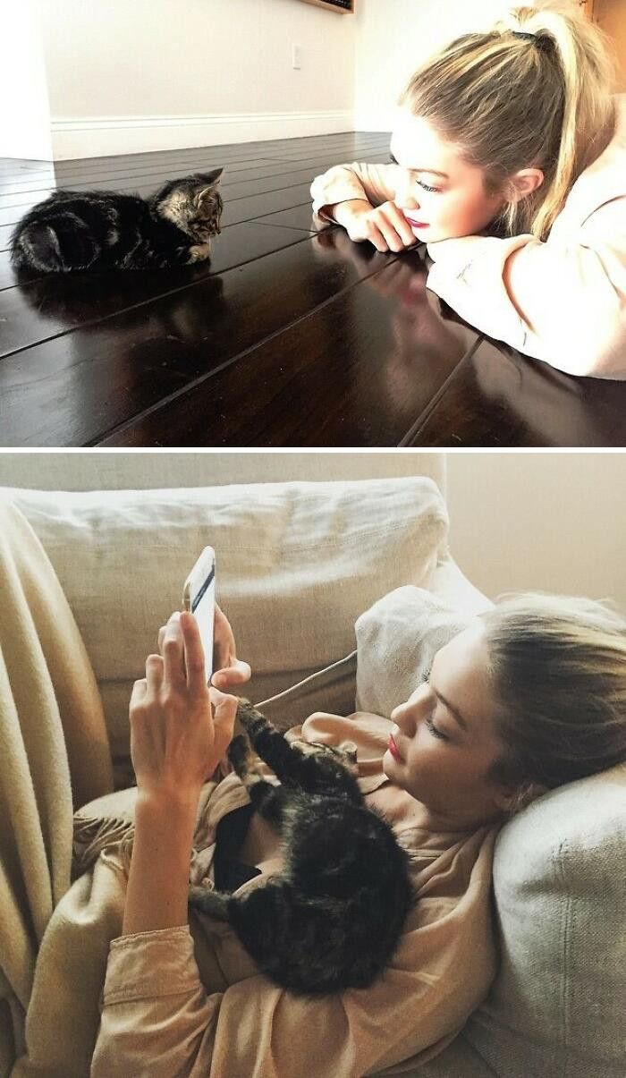5. Gigi Hadid shares pictures of her kitten growing into a cat.