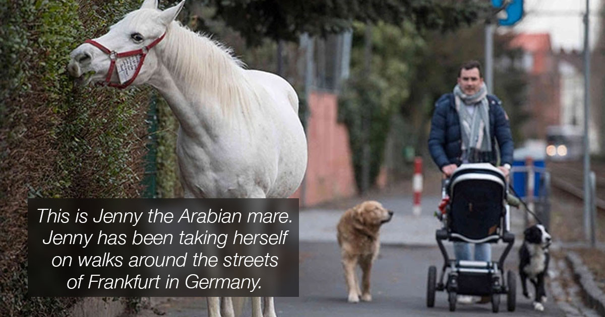 This Horse Has Gone On The Same Solo Walk For 14 Years After His Owner Got Too Old To Ride
