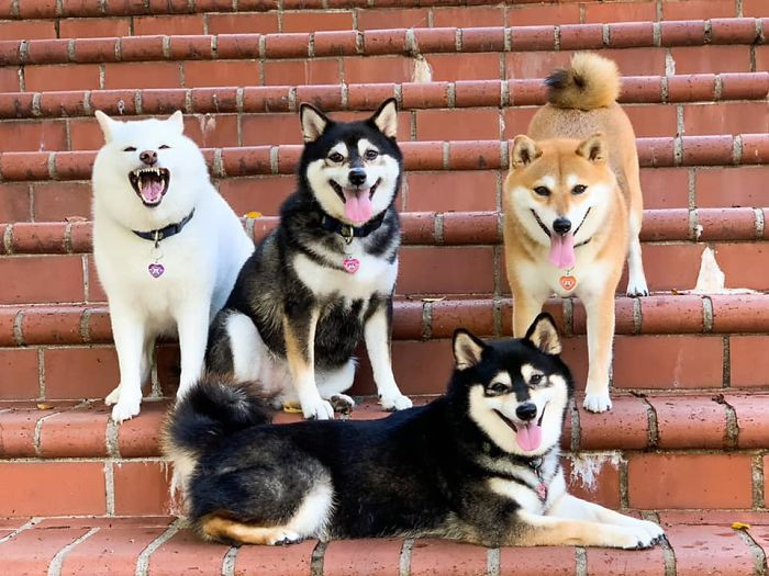 1. Why not look at a bunch of silly dog photos?