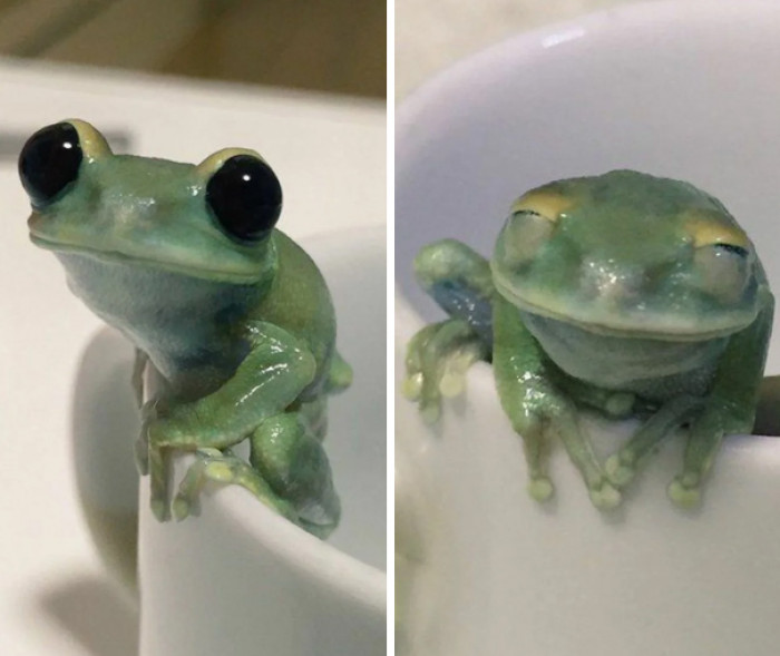 4. The happiest froggo