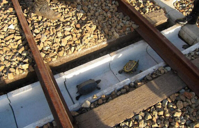 36. Special turtle pathways