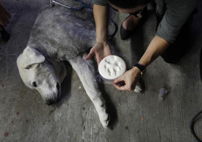 1. Preserving footprint of their beloved dog