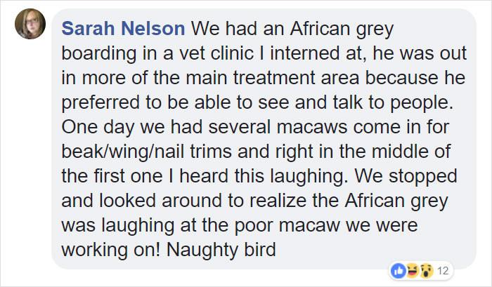 9. African greys seem like bullies.