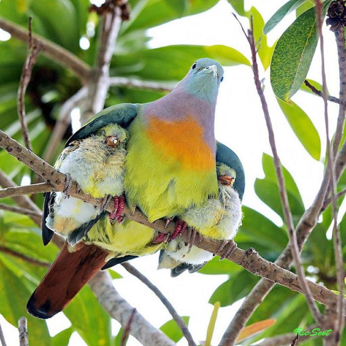 6. Mama bird keeping her birds under her wings
