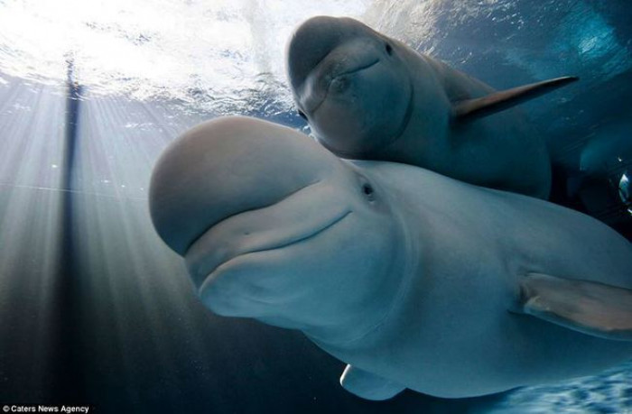 32. Baby and mom Beluga