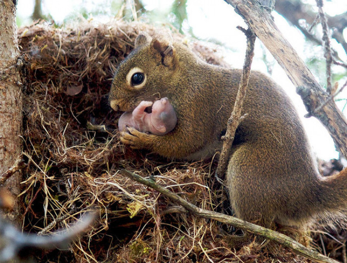 10. Squirrel holding its newborn