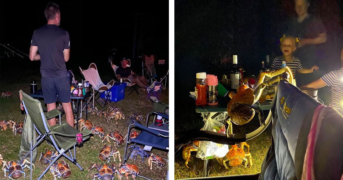 Family Went On A Camping Trip To A Remote Australian Island, But Were Suddenly Surrounded By Big Carnivorous Crabs
