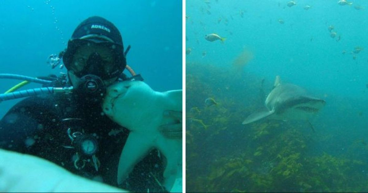 This Australian Man Has Been Cuddling a Shark For Seven Years