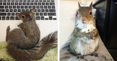 Squirrel Rescued From Hurricane Won't Take A Nap Without Her Teeny Teddy Bear