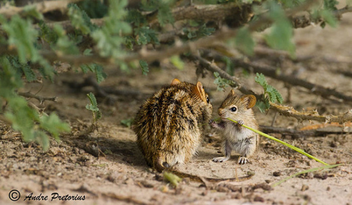 35. Mama and baby mouse in a conversation