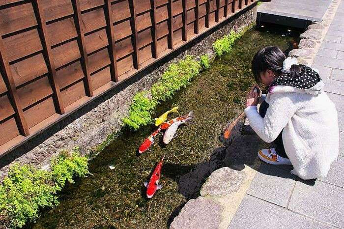 39. Drainage canals on Kyushu Island are so clean that fish is living in them.