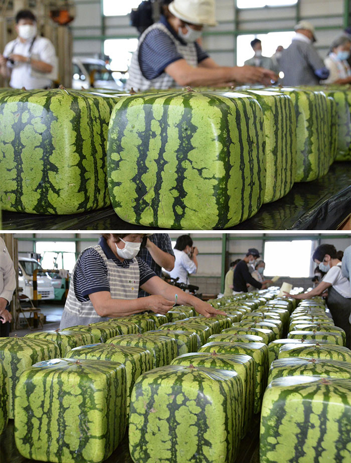 40. Square watermelons