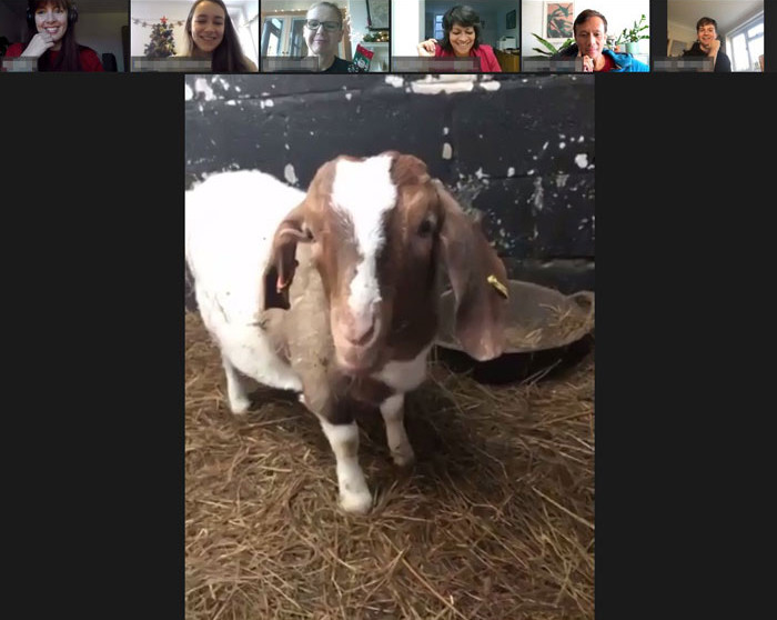 Well, the very next day, the farm received a flood of phone calls and emails, all from people interested in hiring the goats.