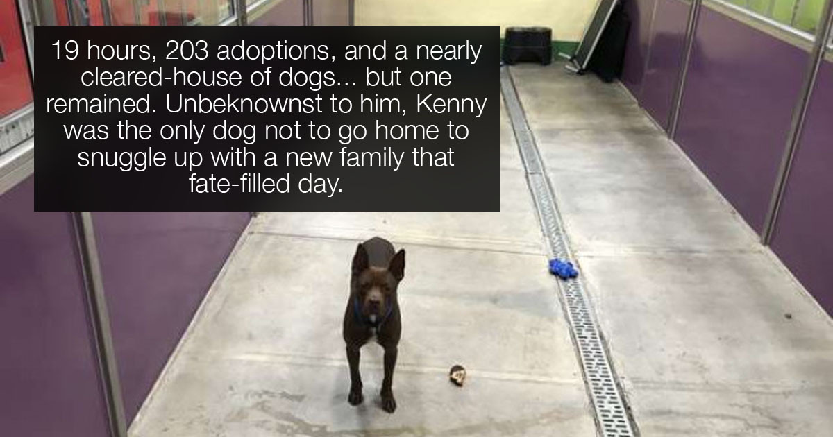 Pet Adoption Event Leaves A Single Dog Behind And No One Knows Why