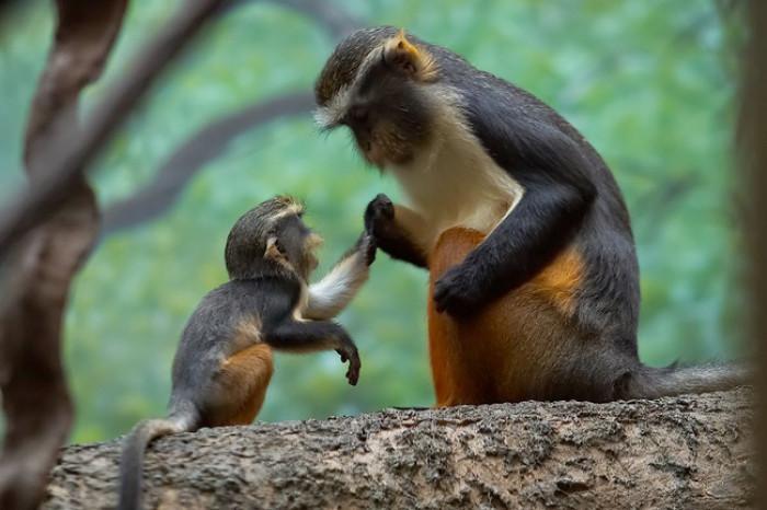 21. Baby monkey telling mama stories