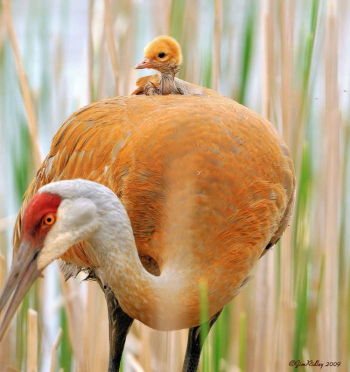 18. Baby birdie sitting on top of mama