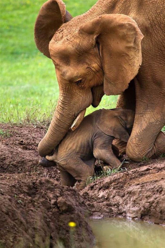 22. Mama and baby elephant hugging