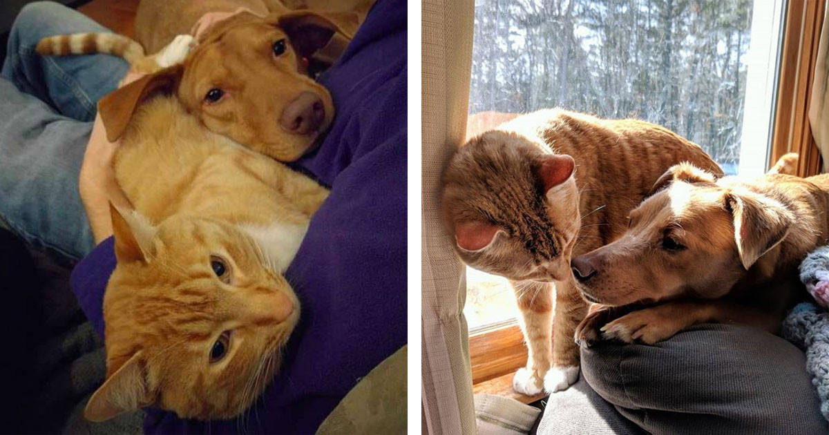 Cat Comforts Anxious Dog For 8 Hours Straight While Owner Is Away