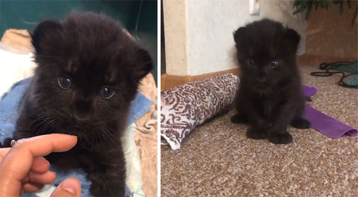 Luna was abandoned by her mother, so she needed human care.
