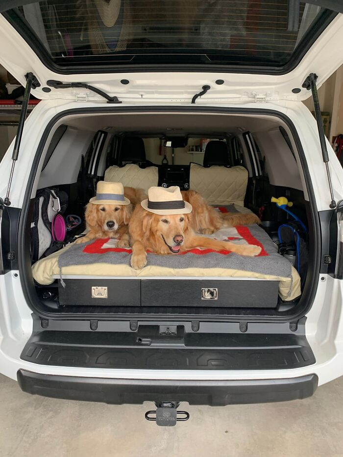 #1 Traveling in style, the dogs travel stylish, too!