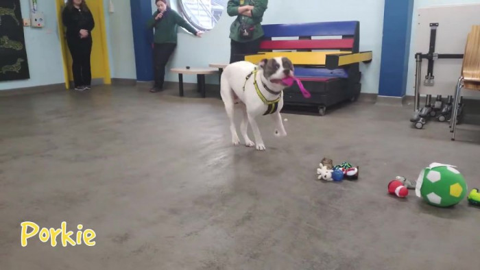 """On their their Facebook page, Dogs Trust Ireland say they are """"working towards the day when all dogs can enjoy a happy life, free from the threat of unnecessary destruction."""" They also promise that they will """"never destroy a healthy dog."""""""