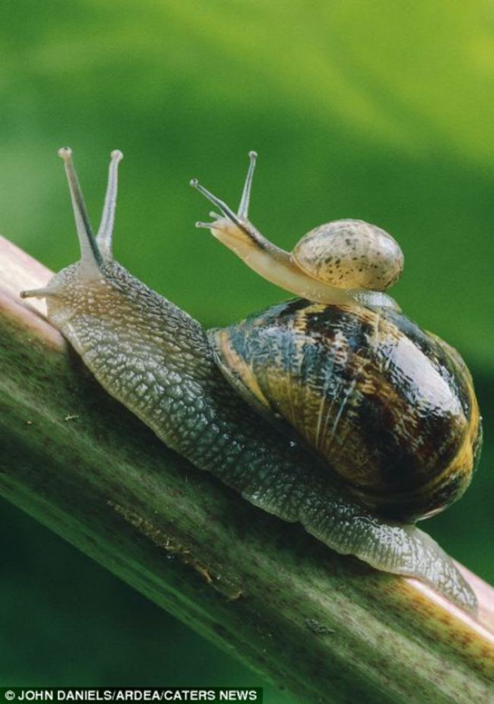 30. Mama and baby snail