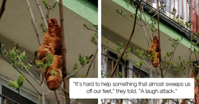 Frantic Caller Informed The Rescuers About A Strange Unidentifiable Animal Stuck High Up In The Tree