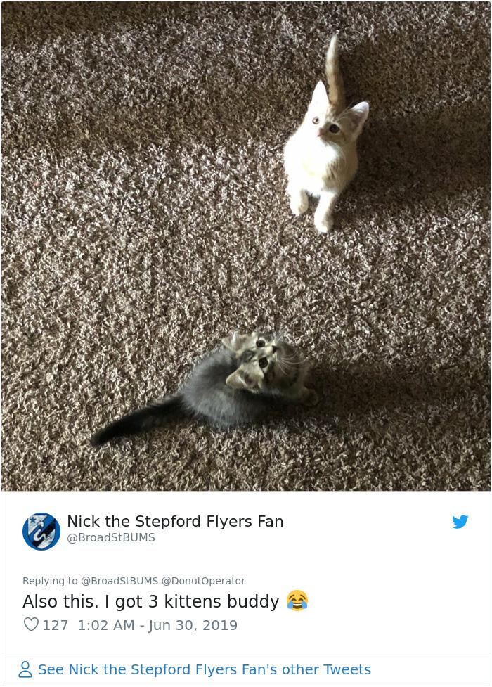 #28 All the kitten goodness!