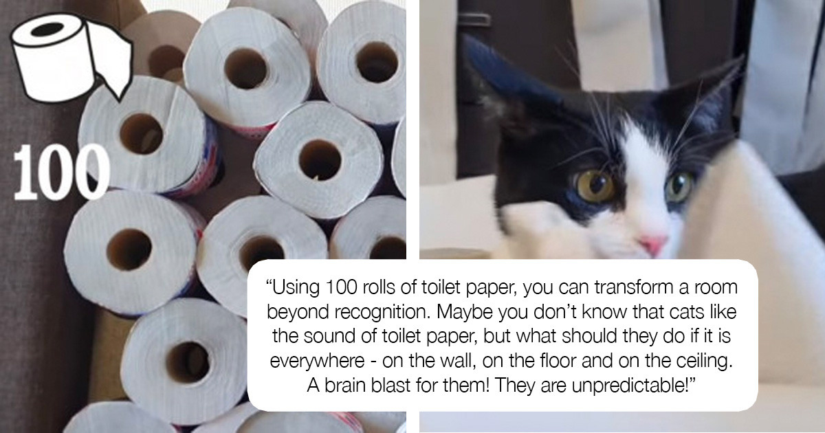 Cat In A Room Full Of Toilet Paper Is The Definition Of Happiness