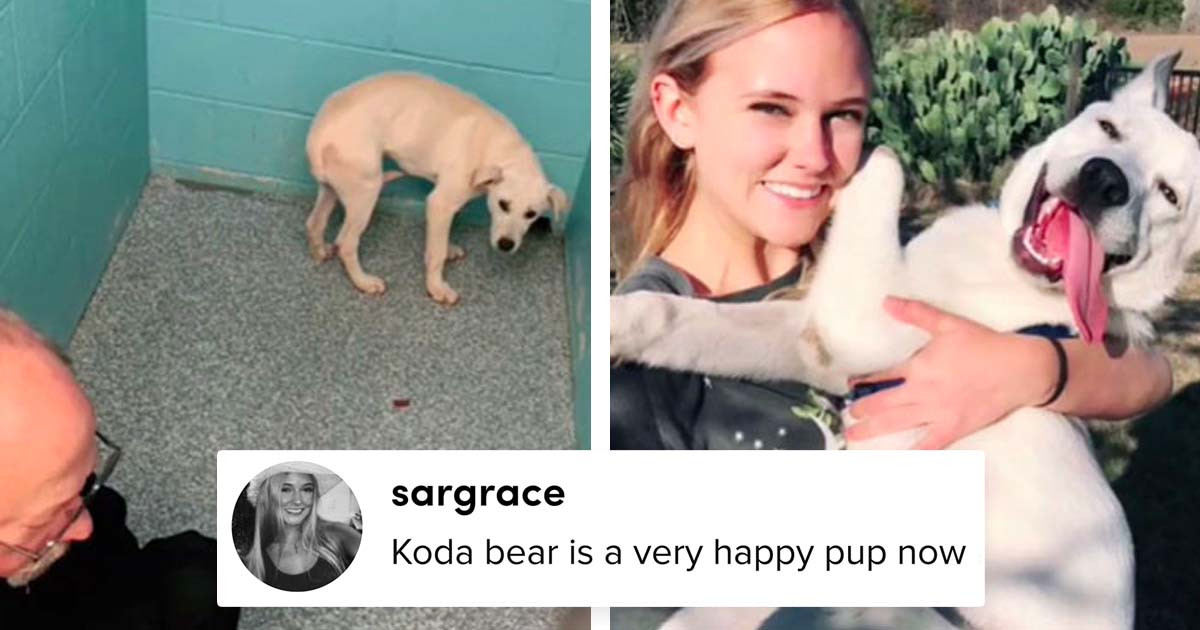 People Are Sharing The Before And After Pictures Of Their Dogs After Adoption In This TikTok Challenge