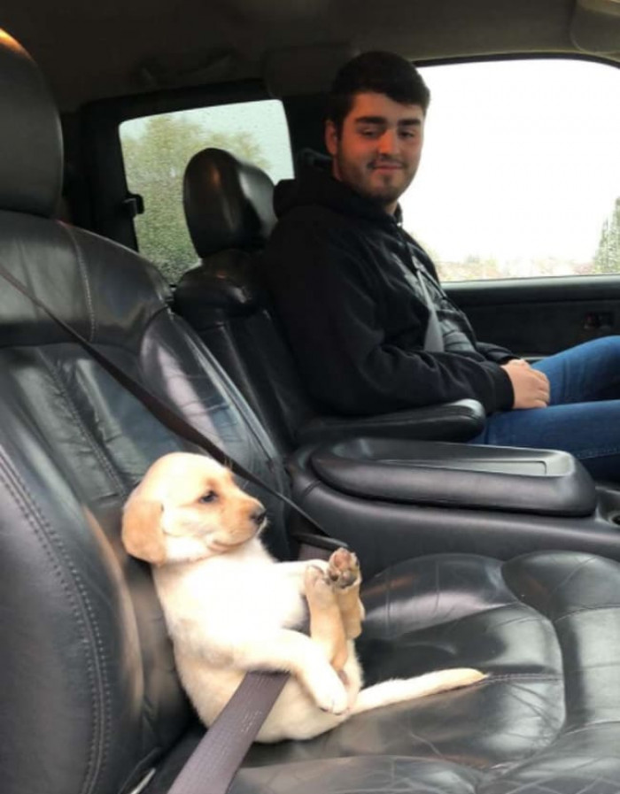 4. A pupper all buckled up