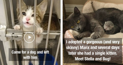 Wonderful Rescue Pet Photos That Show How Important It Is To Adopt And Not Shop