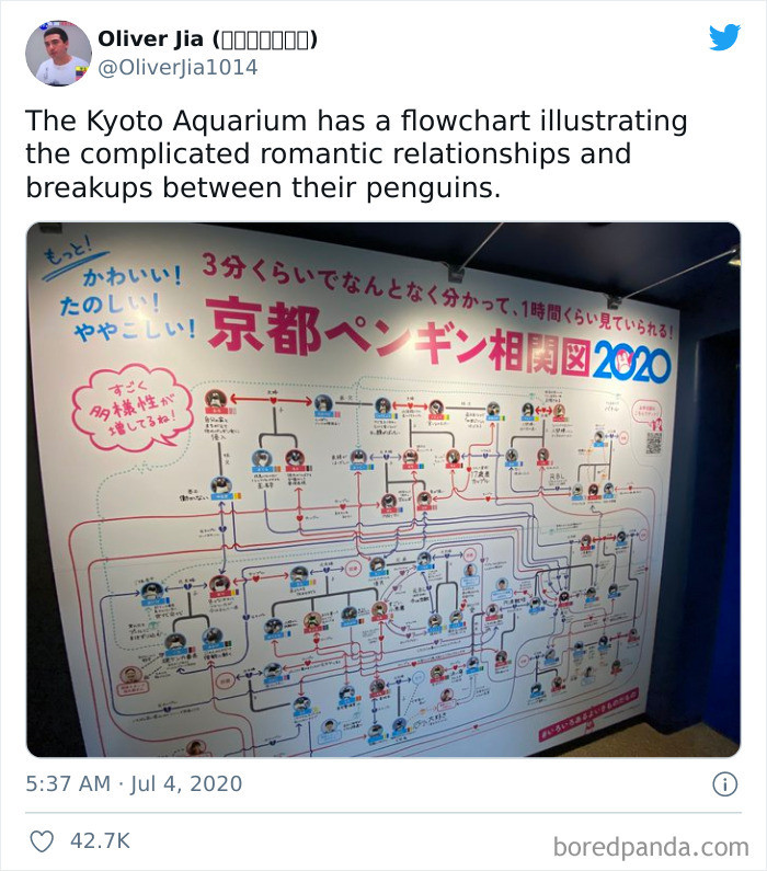43. Love in penguin world...