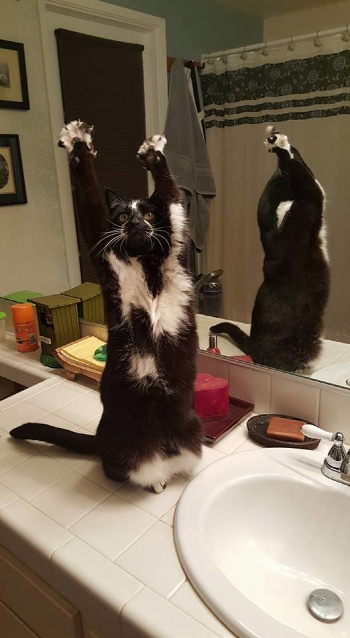 5. Let me see those paws up in the air!