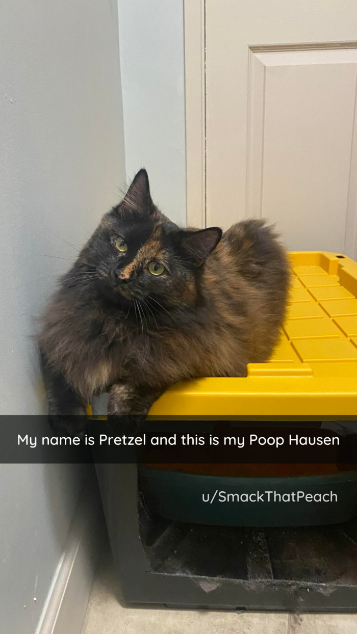 13. Cats have the weirdest relationships with their poop boxes.