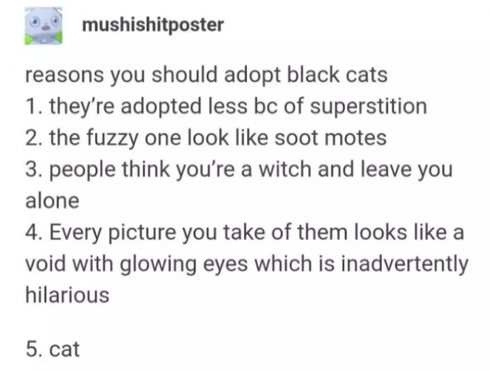 Black cats are the least likely to be adopted! Get yourself a fuzzy little void TODAY