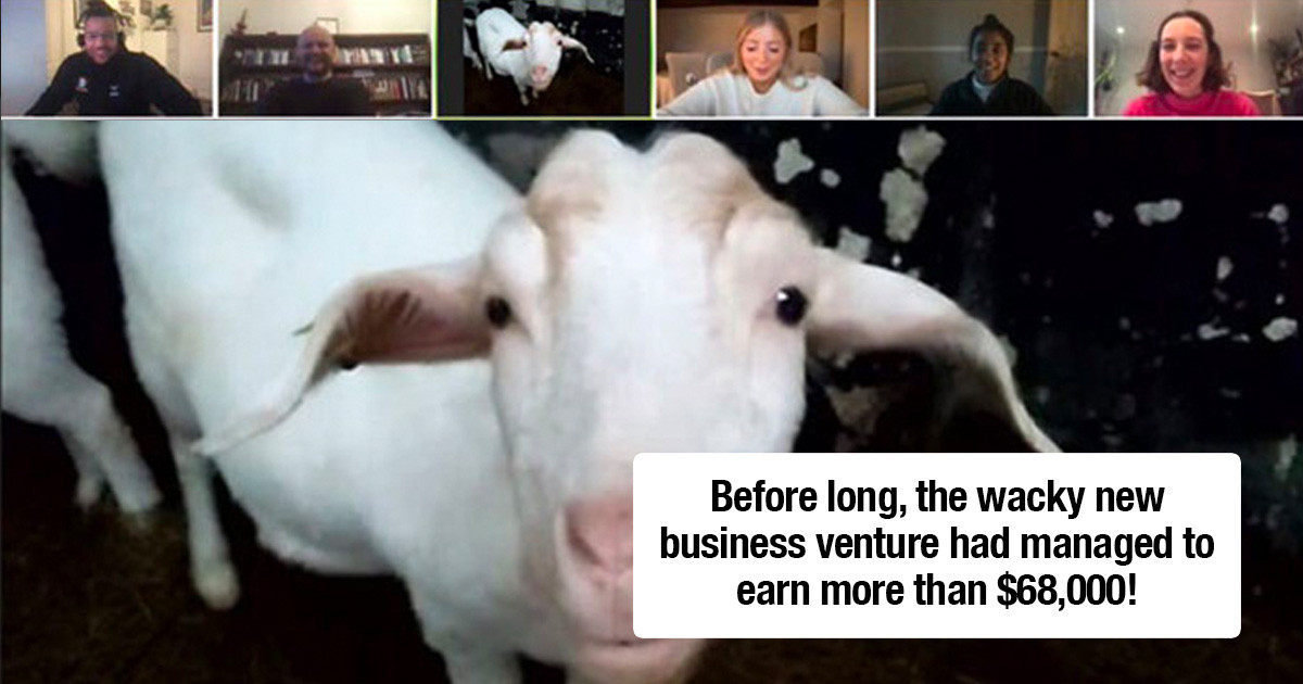 Farm Rents Out Their Goats For Zoom Conference Calls At $6.80 Per 5 Minutes