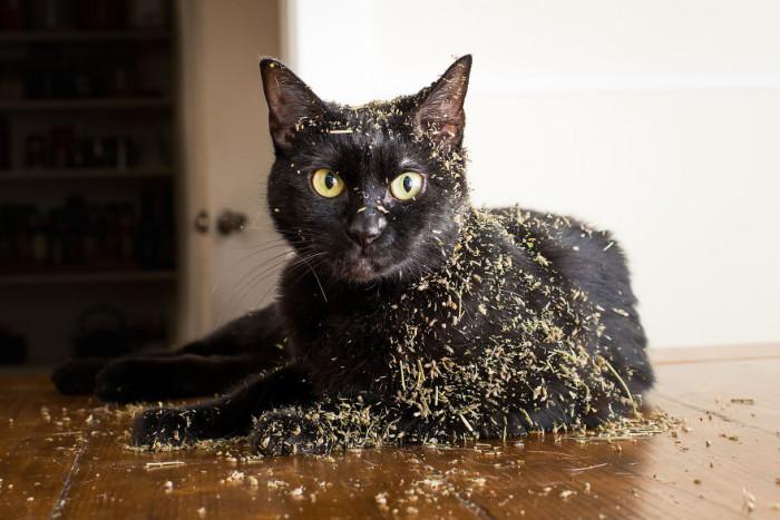 5. What catnip?