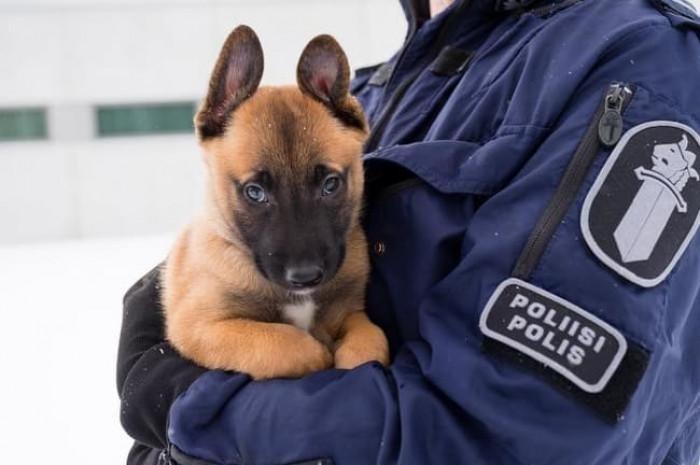 7. Professional pup