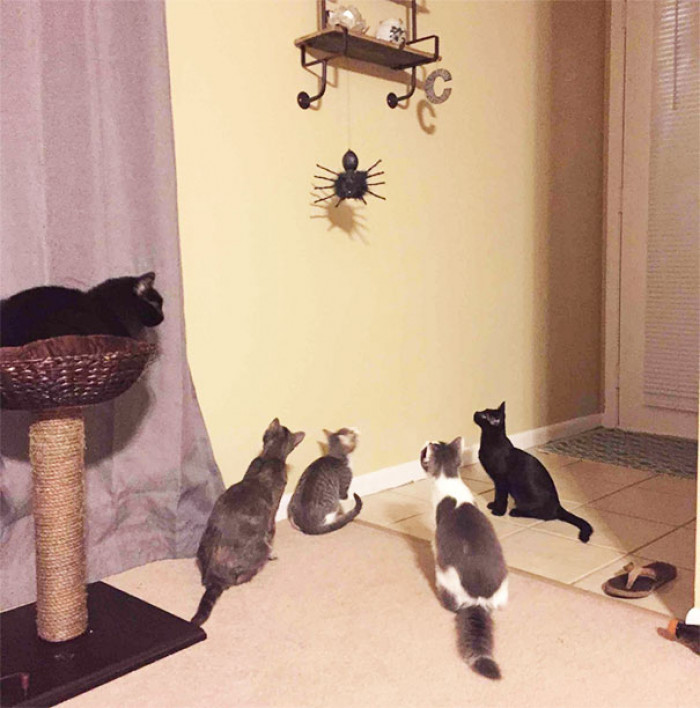 When your cats notice the Halloween decorations...