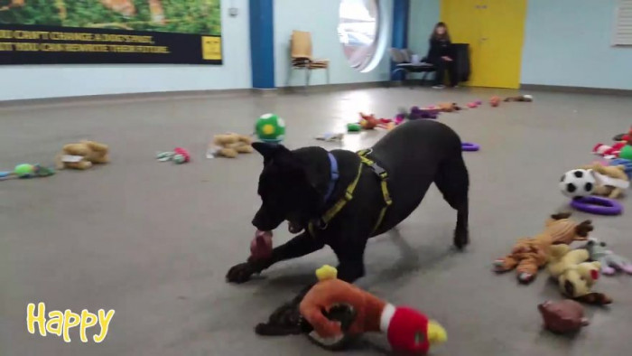 The staff decided to find a way for each dog to pick out their own gift this year!